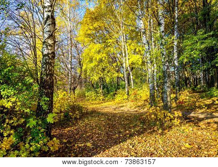 Wonderful Autumn Lane In The Forest