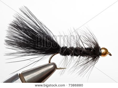 The Black Woolly Bugger