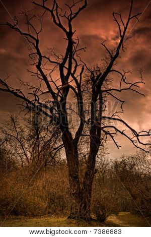 A Dead Tree In Hell