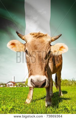 Cow With Flag On Background Series - Nigeria