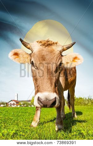 Cow With Flag On Background Series - Palau