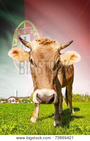 Cow With Flag On Background Series - Portugal
