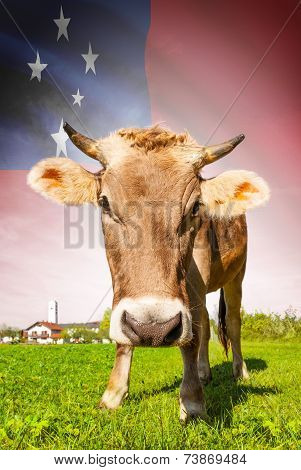 Cow With Flag On Background Series - Samoa