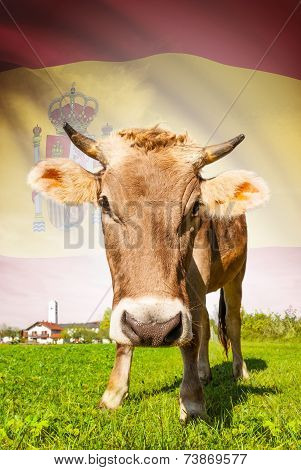 Cow With Flag On Background Series - Spain