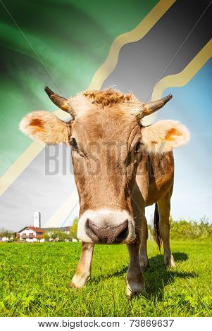 Cow With Flag On Background Series - Tanzania