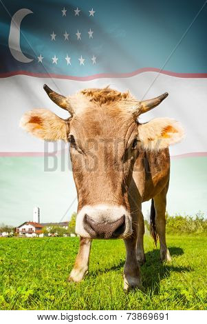Cow With Flag On Background Series - Uzbekistan