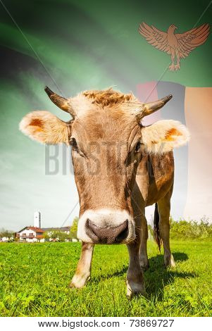 Cow With Flag On Background Series - Zambia
