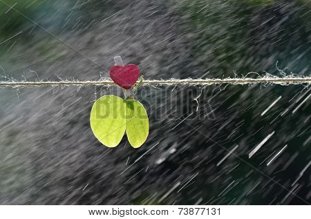 Green leaf with rain,Closeup.