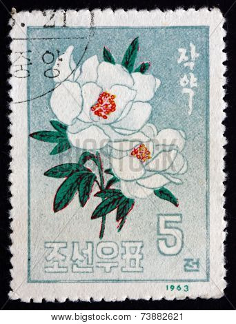 Postage Stamp North Korea 1963 Peony, Paeonia, Flowering Plant