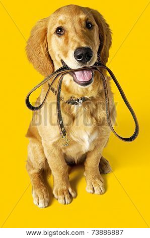 dog with leash