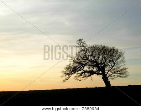 Silhouette of tree against sunset