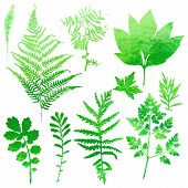 picture of spores  - Set of garden watercolor leaves - JPG