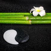 stock photo of frangipani  - beautiful spa still life of symbol Yin Yang frangipani flower and natural bamboo on zen basalt stones with dew closeup - JPG