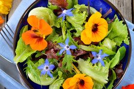 stock photo of borage  - Fresh summer salad with edible flowers nasturtium borage flowers in a bowl - JPG