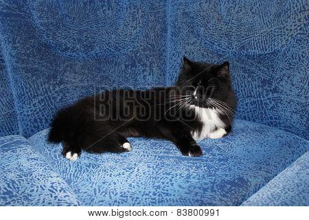 black cat sleeping on the blue sofa