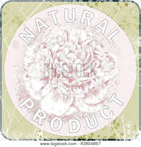 pink peony on grunge background. natural product label.vector illustration
