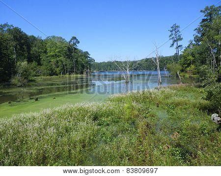 Newport news park lake