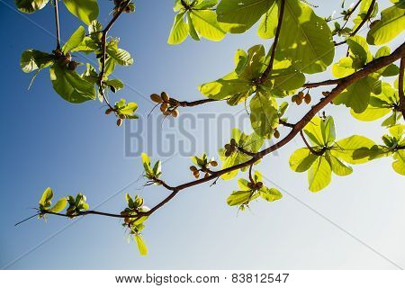 Branch With Leaves Blue Sky