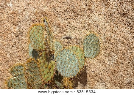 Lizard And Cactus