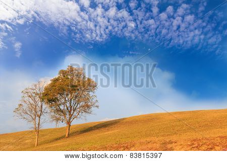 Trees On Hill With Cloud And Sky