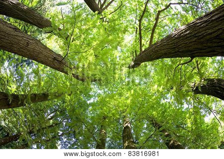 Fish-eye View Of Trees In A Forest In Summer