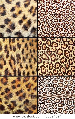 Collection Of Different Leopard Pelts