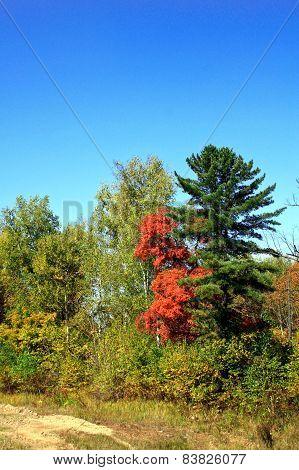 Beautiful Pair Of Trees