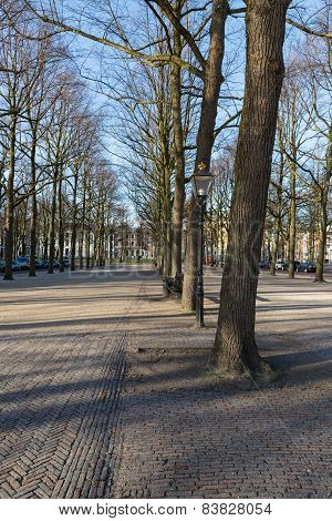 Linden Trees In City Centre Of The Hague, The Netherlands