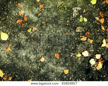 Scorched Ground With Autumn Leaves For Background  And Texture