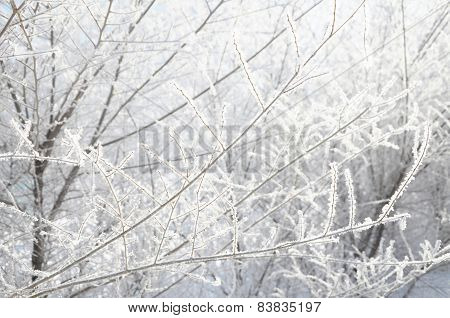 Branches In Rime