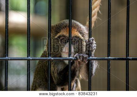 Trapped Monkey