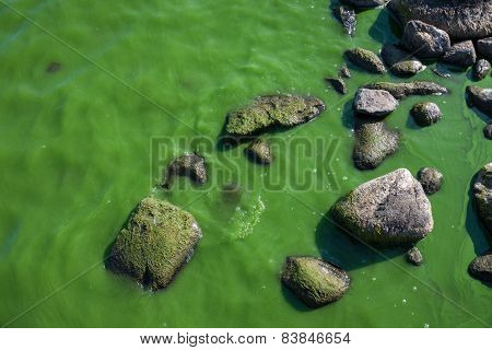 Mossy Waters