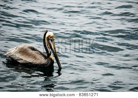 The Floating Pelican