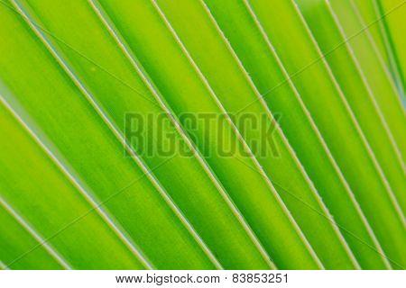 Green coconut leaf pattern