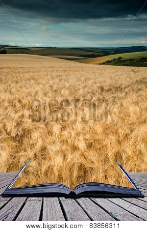 Stunning Wheat Field Landscape Under Summer Stormy Sunset Sky Conceptual Book Image