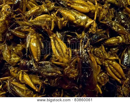 Crispy fried insects