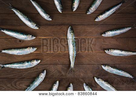 Circle from sardines