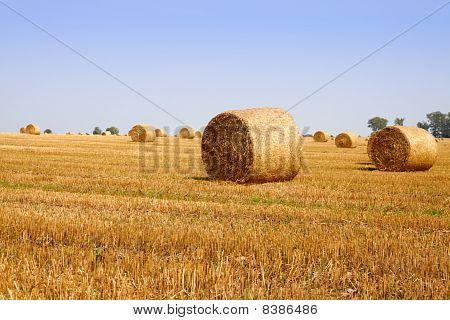 Haycock Field