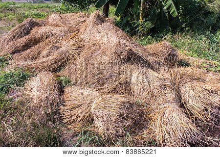 Straw At Countryside
