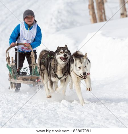 Kamchatka Kids Dog Sledge Race