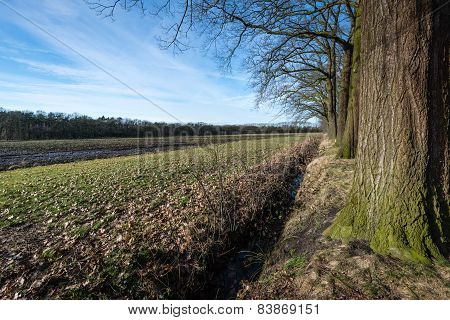 Row Of Bare Tree Beside A Field In Wintertime
