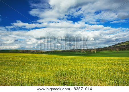 Field Of Yellow Rapeseed Against The Blue, Cloudy Sky