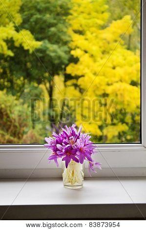 bouquet of autumn crocuses