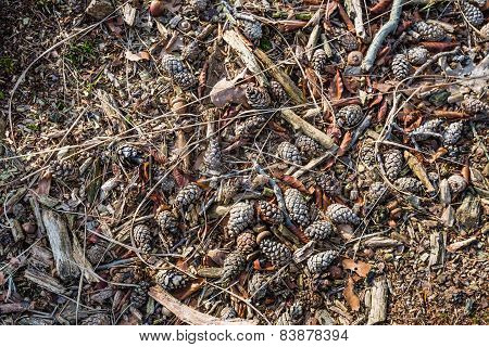 Fallen Leaves, Acorns And Pine Cones On The Floor Of A Forest From Close