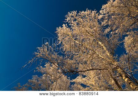 Snow Covered Trees Against Sky At Sunset