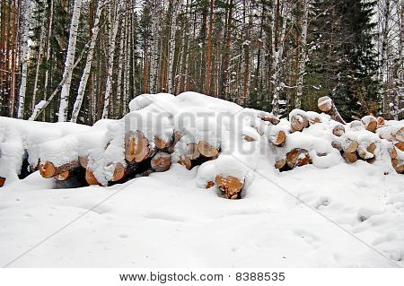 Harvested Wood
