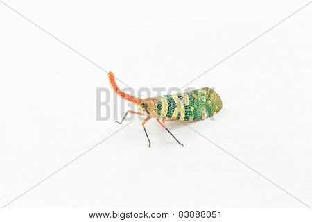 Green Winged Insects