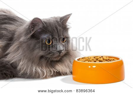 Persian Cat Sitting Near The Bowl Food