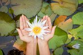 pic of single woman  - Woman hands holding lotus flower waterlily against leaves background - JPG
