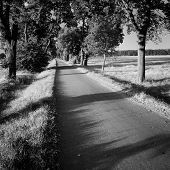 foto of tree lined street  - Street in alley in black and white color - JPG